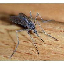 Fumigación Mosquitos En Republica Dominicana 809-273-7599