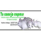 Ventas De Conejos Al Por Mayor Y Al Detalle.