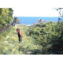 Terreno Frente Mar Caribe (en Palenque) - De Oportunidad