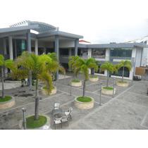 Alquiler Local Comercial En Santiago En La Plaza